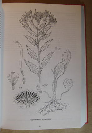 Image for Sunflower Family (Asteraceae) of British Columbia; Volume II; Astereae, Anthemideae, Eupatorieae and Inuleae, The