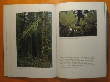 Image for Sunlight in the Shadows: The Landscape of Emily Carr