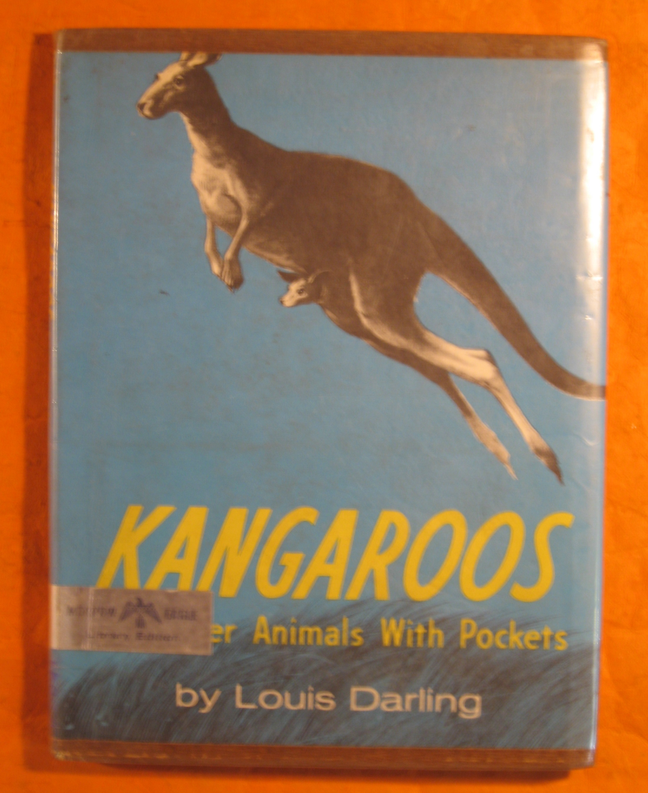 Image for Kangaroos and Other Animals with Pockets