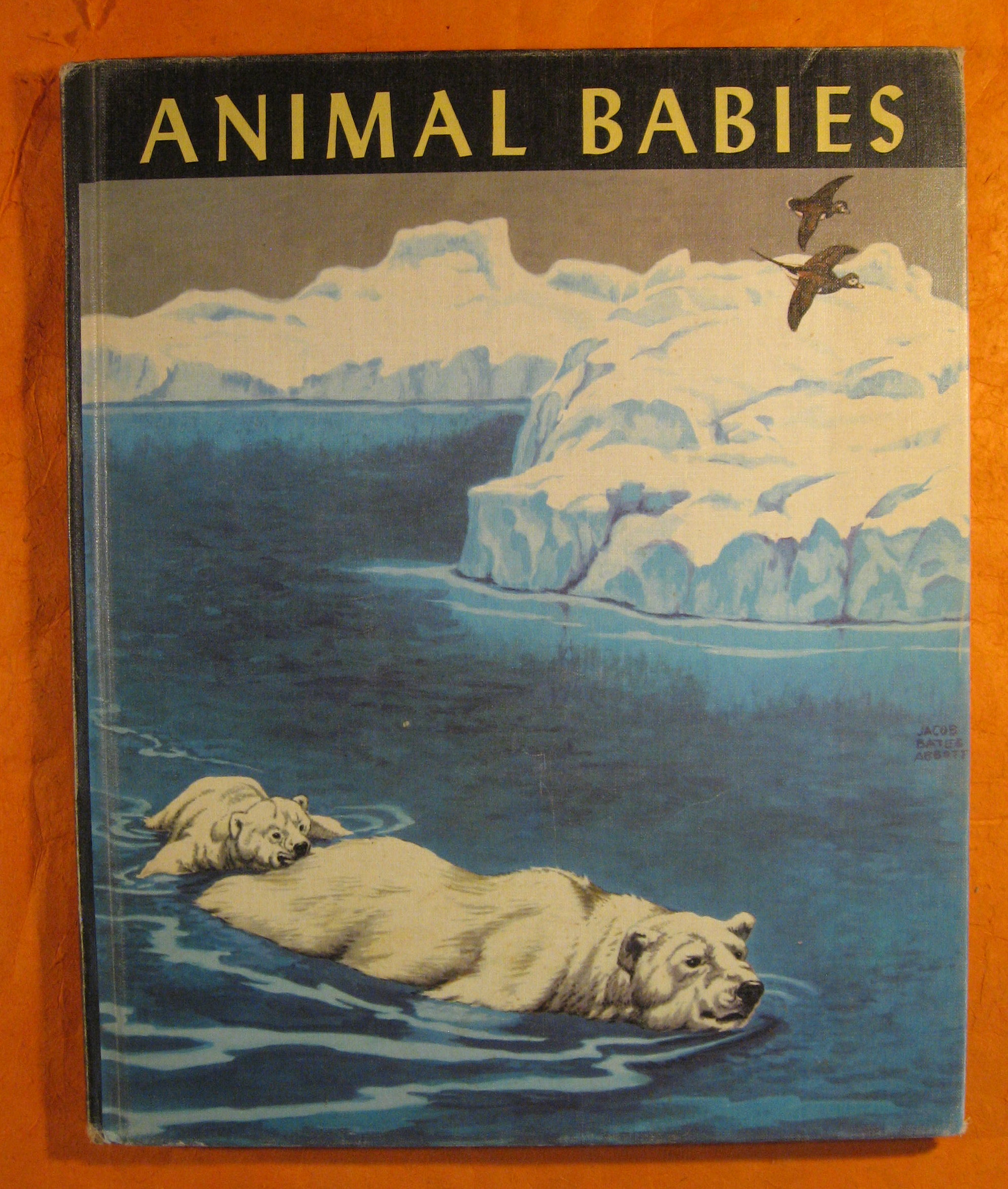 Image for Animal Babies
